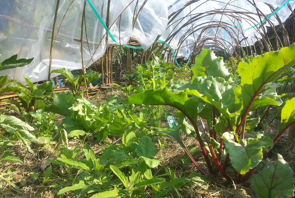 Willow poly-pod and herb garden - Ayurvedic Permaculture Garden Design, Finstock, Oxfordshire - Gaiaveda Gardens