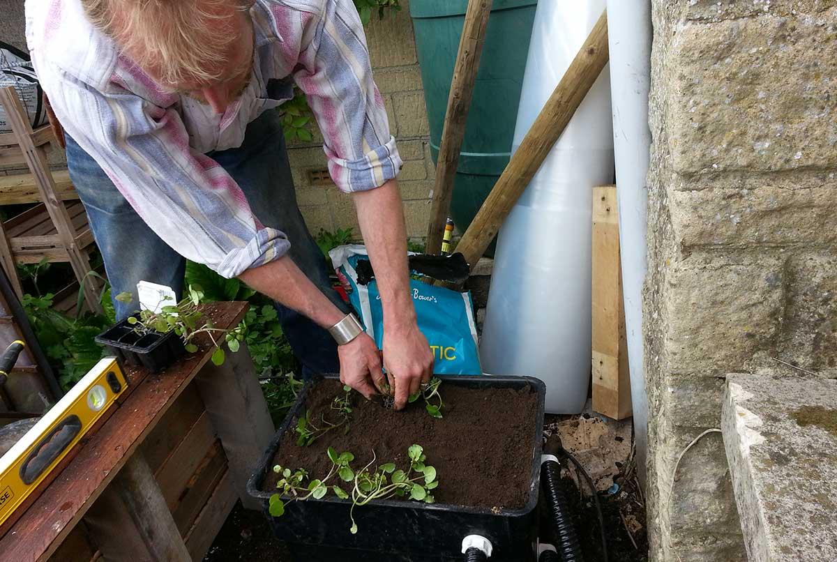 Herb garden - Ayurvedic Permaculture Garden Design, Finstock, Oxfordshire - Gaiaveda Gardens