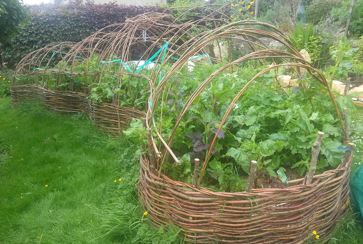 Willow poly-pod with herbs - Ayurvedic Permaculture Garden Design, Finstock, Oxfordshire - Gaiaveda Gardens