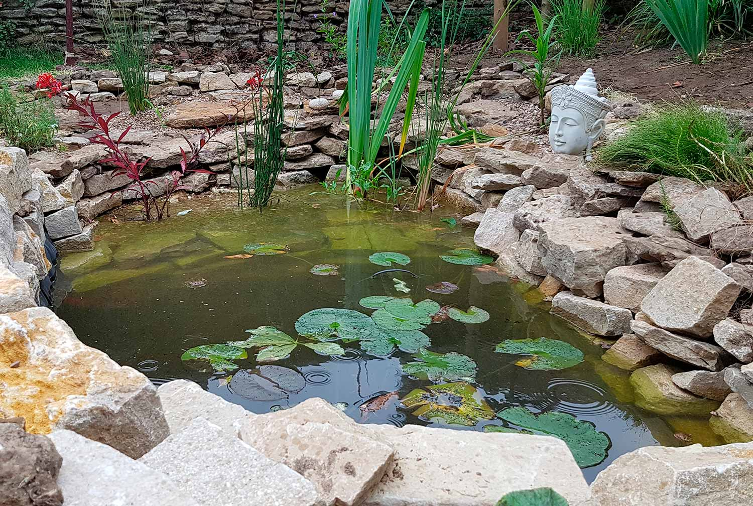 eco-friendly pond, Longworth, Oxfordshire - Gaiaveda Gardens