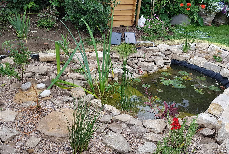 eco-friendly pond, Longworth, Oxfordshire - Gaiaveda Gardens